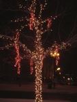 Montreal - arbre